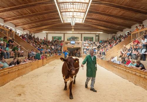 Zuchtrinderversteigerung in Maishofen, Milchkuh Auktion, Foto: Michael Rasche