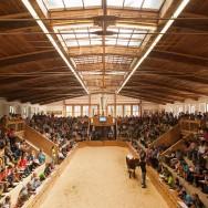 Zuchtrinderversteigerung in Maishofen, Foto:Michael Rasche